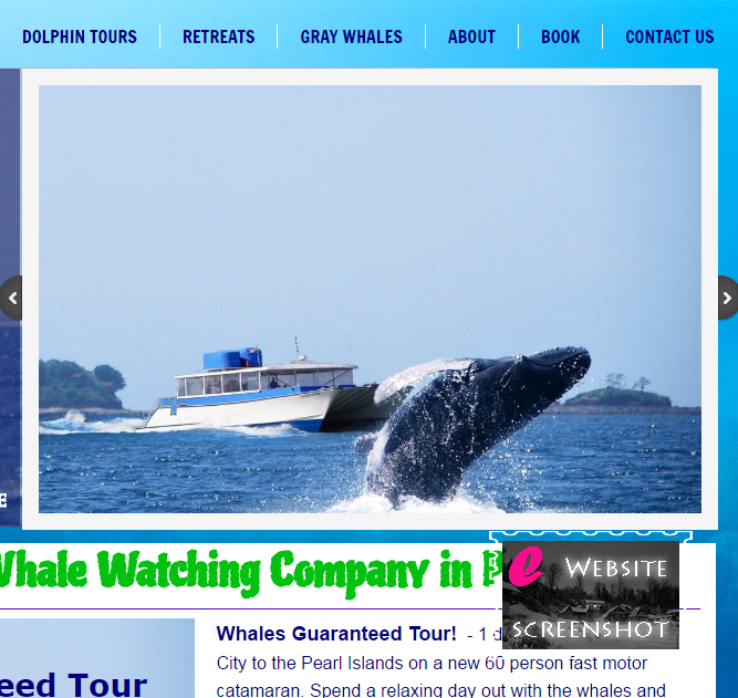 Whale Watching Panama