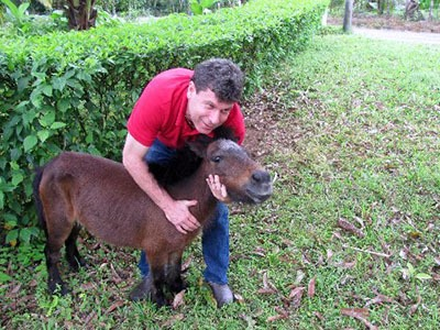 Our Miniature Horses and Donkeys