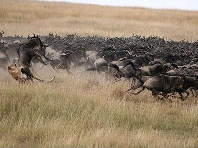 Mara Attack
