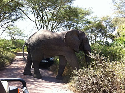 Offer ecotourism in Tanzania and Mega fauna viewing, walking Safaris, hiking Kilimanjaro, scuba diving, bird watching, cycling along Mt Kilimanjaro, Zanzibar beach excursion and other adventure activi