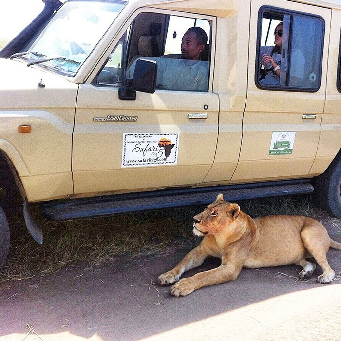 SB5 FLEET WITH LIONESS IN NGORONGORO