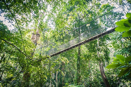 Canopy at Amazon Jungle