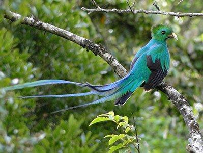 brets-quetzal