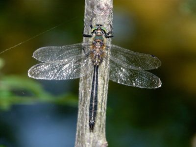 Dragonfly tours