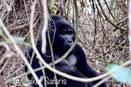 3 days Gorilla Tracking in Bwindi Forests