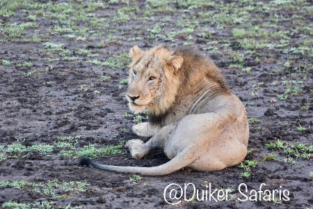 Game Drives in Queen Elizabeth National Park