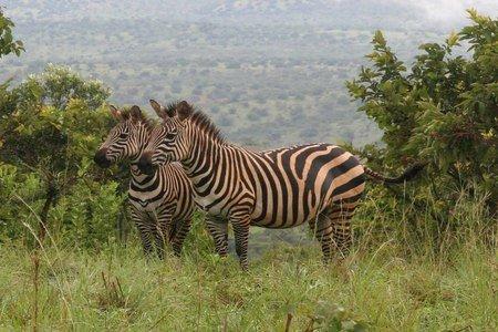 Trek Rwanda Gorillas