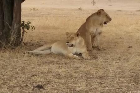 Nomadic Tours Safaris