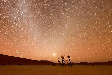Namib park night