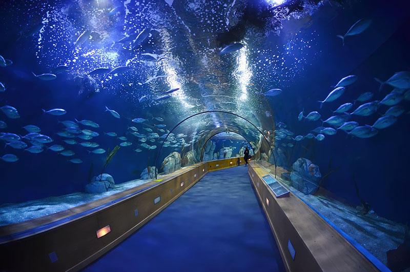 aquarium valence espagne tarif 28 images file valencia l oceanogr 224 fic2 jpg wikimedia. Black Bedroom Furniture Sets. Home Design Ideas