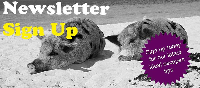 Ideal Banner Newsletter