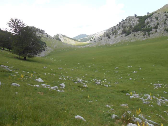 Pig's Meadow