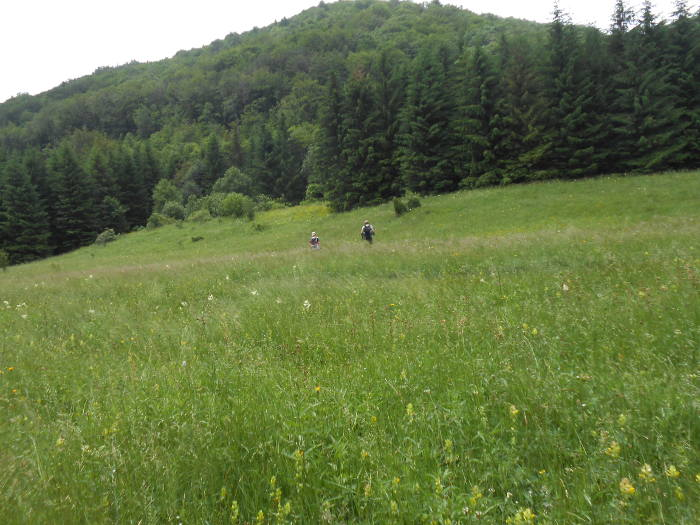 Crossing Musuroane Meadow to Domogled