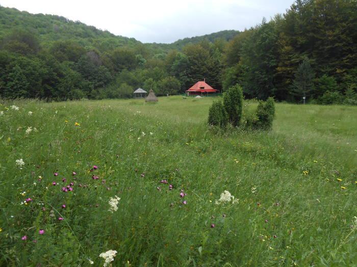 Musuroane Meadow